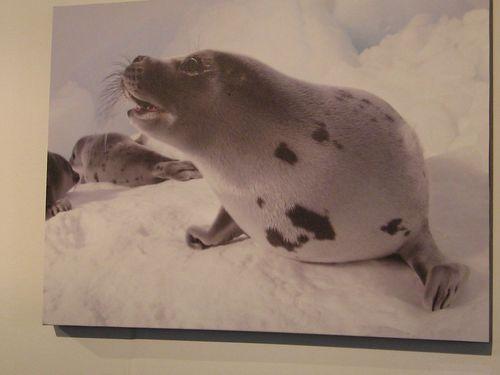 Seals (4)